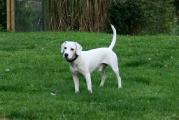 Beagle-Mix_Ruede_Lucky