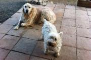 braves_Hundepärchen_Lea_und_Gipsy