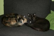 braves_und_verschmustes_Katzenpaerchen_Sheila_und_Nero