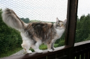 entzückende MC Katzenmädchen Dea