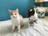 entzückendes Katzenpärechen Alfred und Ida kleiner