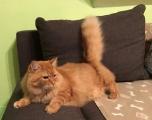ganz liebe und sanfte Katzendame Lilly