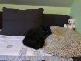 Hübsche Katzendame Minky kleiner