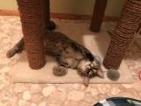 Katzenbaby Lilly