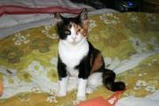 Katzenfraeulein_Madame_Mim