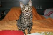 Katzenmaedchen_Malefiz