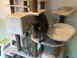 liebe Katzendame Misty kleiner