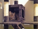 liebe Katzendame Wipsy
