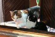 Liebes_Katzenpärchen_Kater_Speedy_und_Katze_Kitty