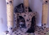 Lucy und Mina