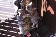 süßes_Katzenmädchen_Lucie