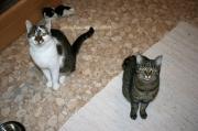 SchmusepärchenLeo und Lilli