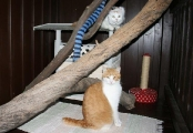 sehr_braves_Katzenpaerchen_Yvette_und_Carlos