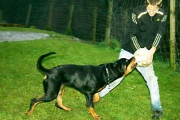 Stella mit David