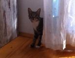 aufgewecktes Katzenmädchen Kiki