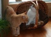 entzückende_Katzenkinder_Eleonore_und_Amy