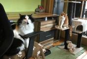 Freundiches Duo Katze Cordula und Kater Cornelius