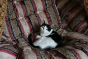 Katzenmaedchen_Daisy