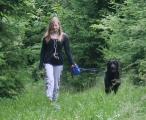 Labrador_Rüde_Flann