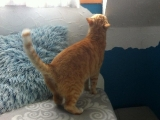 Liebe Katzendame Flocke