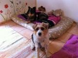 Liebes Hundepaerchen Eros und Lilli