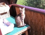 liebes Katzenmädchen Gini