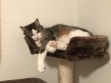 ruhige Katzendame Yui kleiner