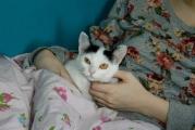 Süßes_Katzenmädchen_Murli