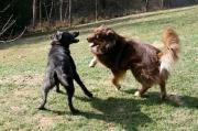 Sitka und Kira in Action