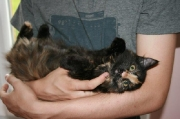 so_lieb_-_Babykatze_Lilli