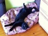 Suesses Katzenmaedchen Murli