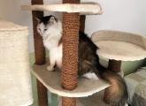 verschmuste Katzendame Happy - kleiner